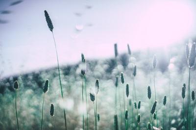 Healing Nature Image